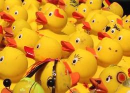 Entenrennen 2014 Vorbereitung